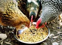 Комбикорм яичных пород РОСТ