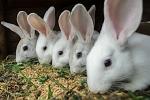 Комбикорм кроликов и нутрий